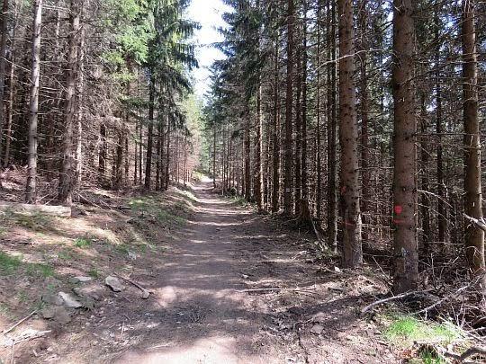 Las na Skałce.