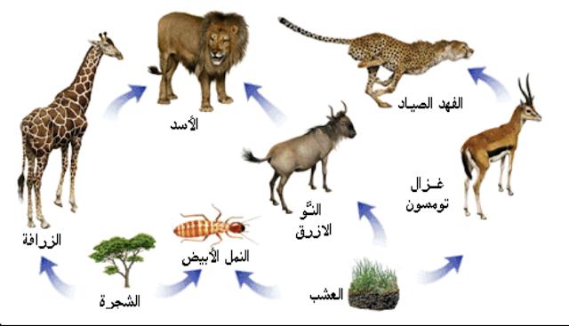 سلسلة غذائية في بيئة الغابة
