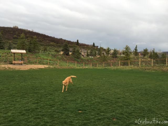 The Woods Trail and Dog Park, Hiking in Utah with Dogs