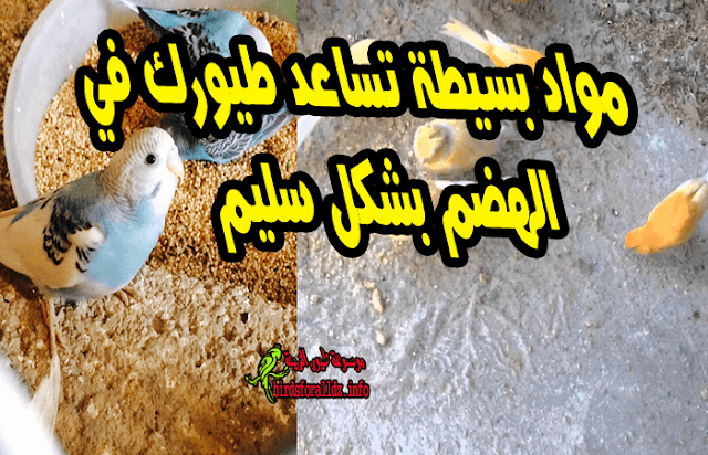 مواد تساعد الطيور في الهضم بشكل سليم