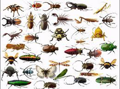 Animals Amp Insects