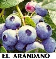 http://www.comocurarlashemorroidesdeformanatural.com/