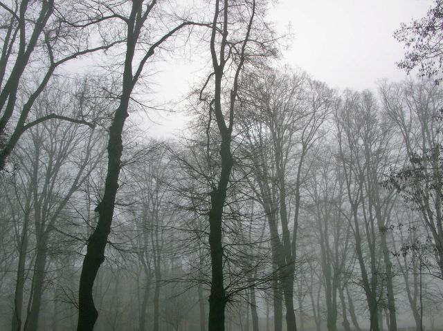 zdjęcie, drzewa, park, Babimost