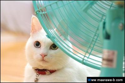 صور صور قطط كيوت 2020 خلفيات قطط جميلة جدا cats42.png