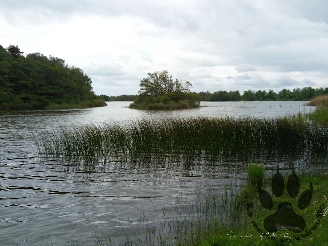Suede-Oland-Horns-kungsgard-hornsjön