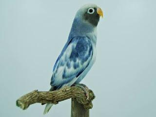 lovebird muka topeng