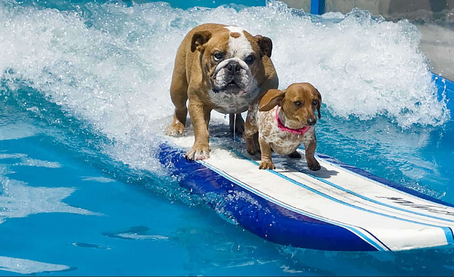 lucy pet foundation seeks surfing dogs in nyc for 2017