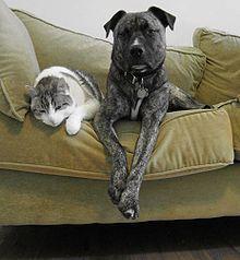 animal de compañía o mascota o animal doméstico