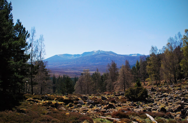 View of Lochnagar from Balmoral Cairns route Aberdeenshire