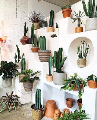 Blog o roślinach