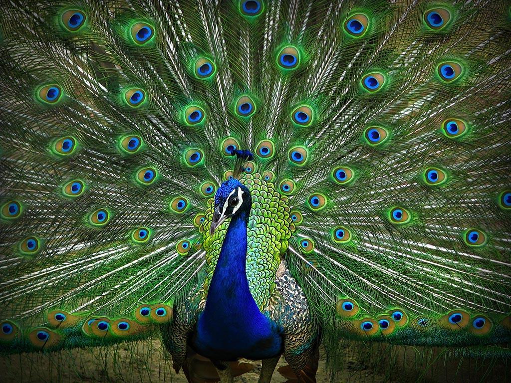Appreciating the beauty of nature essay