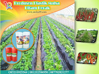 Melayani Pesanan Mulsa Plastik Ukuran Khusus Untuk Pertanian Dan Tambak