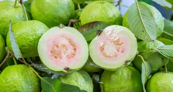 Use Guava Leaves to Beat Wrinkles, Acne, Dark Spots and Skin Allergies