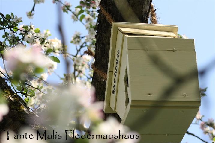 Fledermaushaus Deko