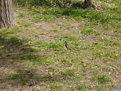 十三公園鳥