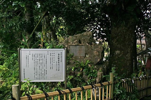 金武観音寺のフクギの説明板と石碑の写真