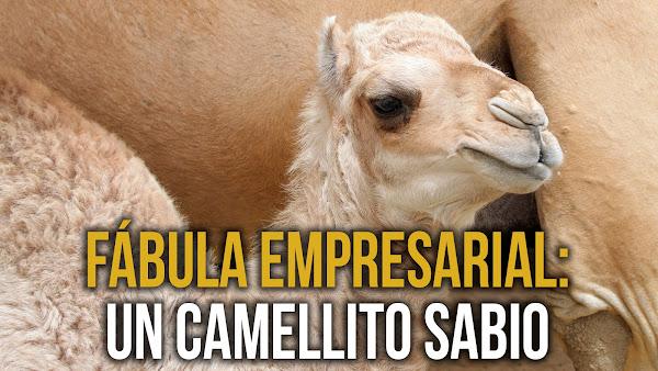 Fábula empresarial - un camellito sabio