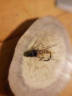 Caddis nymph Fly