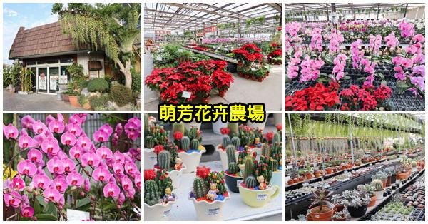 台中后里|萌芳花卉農場|五彩繽紛蝴蝶蘭花海|多肉植物|園藝資材|各種花卉植物|免費參觀