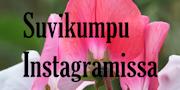 Suvikumpu Instagramissa