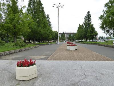 花博記念公園鶴見緑地 サルビアの花壇