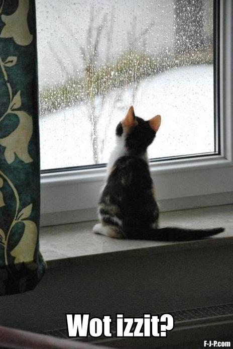 Funny Kitten Watching Rain Wot Izzit Joke Meme Picture
