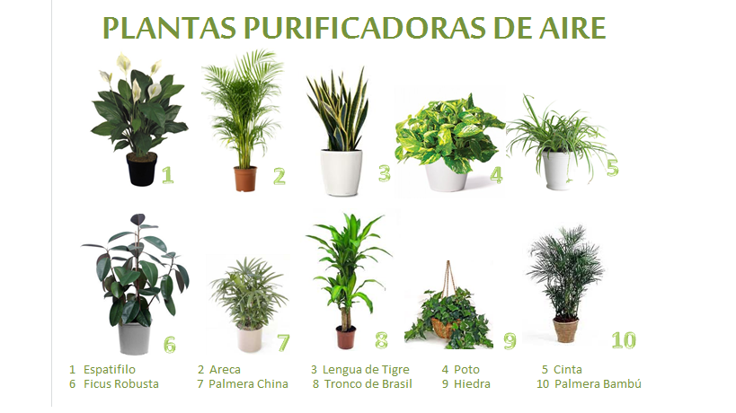 Una casa sana plantas purificadoras 10 palmera bambu for Plantas de interior tipo palmera