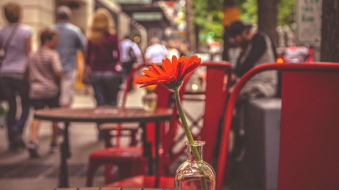 Wallpaper: Red Flower. Urban. People. Seattle