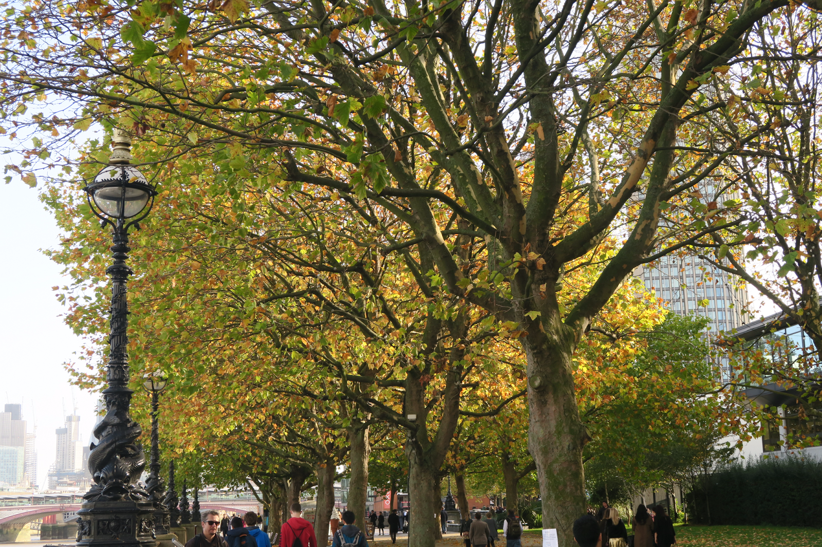 Autumn trees in London