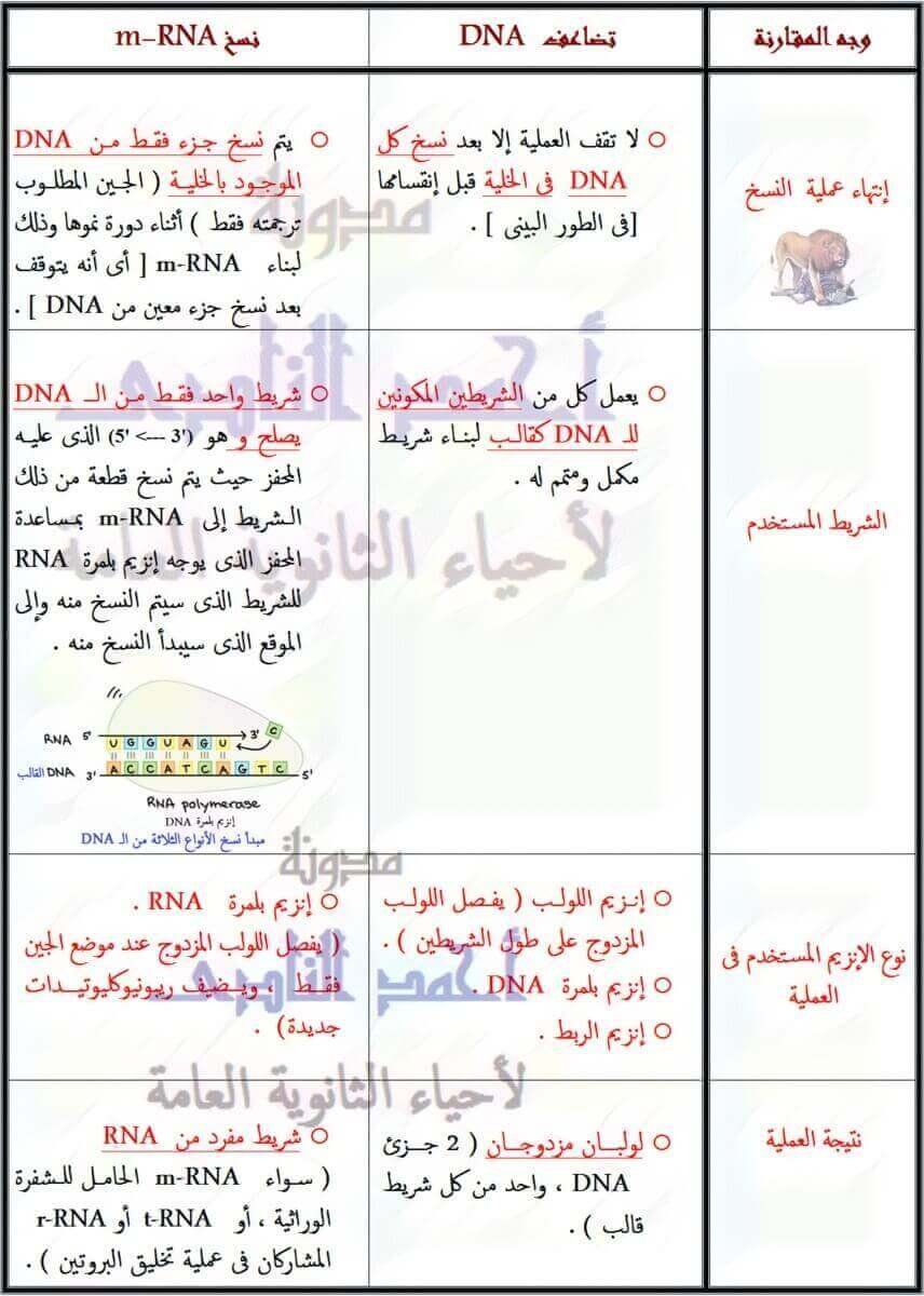 الفرق بين تضاعف DNA و نسخ m-RNA - الثالث الإعدادى