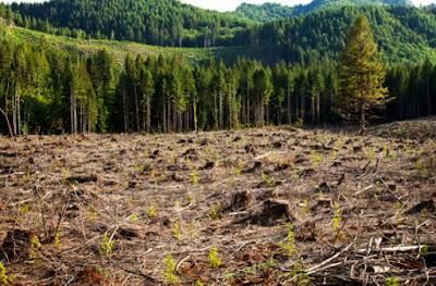 Causas principales deforestación