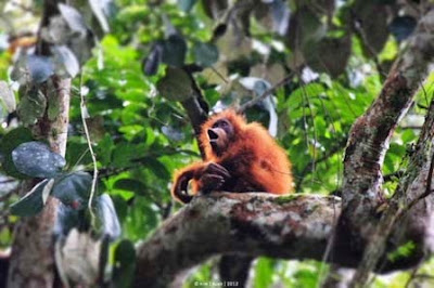 Obyek Wisata di Kabupaten Aceh Tenggara