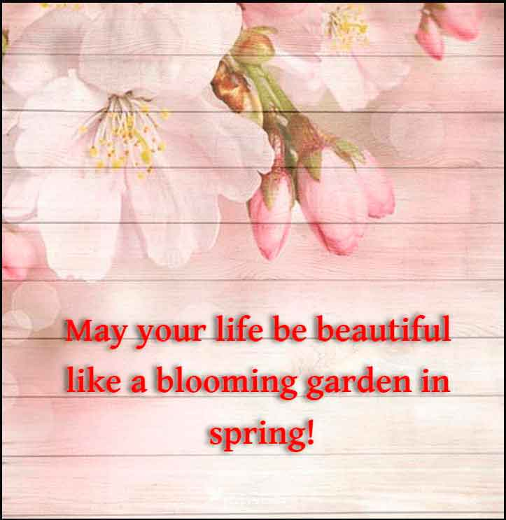 May your life be beautiful like a blooming garden in spring! Happy Birthday Friend