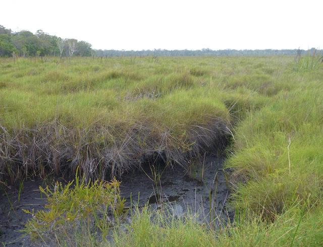 Peatland carbon sinks at risk