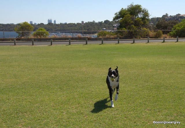 Dog Park, East Fremantle, Western Australia