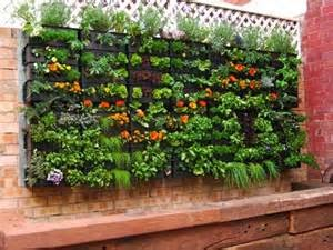 cara membuat taman vertikal sendiri, taman vertikal sederhana, cara membuat taman vertikal minimalis, taman vertikal murah, taman vertikal rumah, cara membuat taman vertikal sederhana