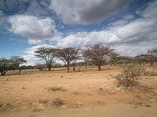 8 Jenis Vegetasi Alam atau Bioma Menurut Iklim
