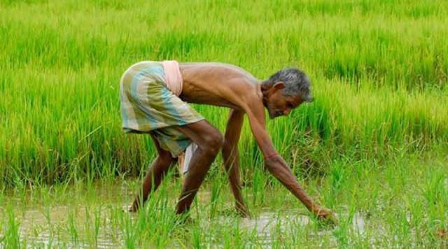 বাজেটে বড় ঘোষণা, কৃষকদের অ্যাকাউন্টে ঢুকবে ছ'হাজার টাকা