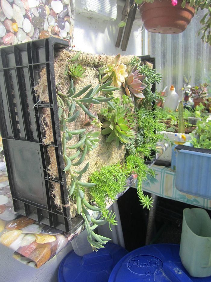 Manualidades puri diaz jardin vertical reciclando for Como construir jardines verticales caseros
