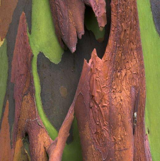 Unik Pohon Degan Warna Pelangi Contoh Artikel