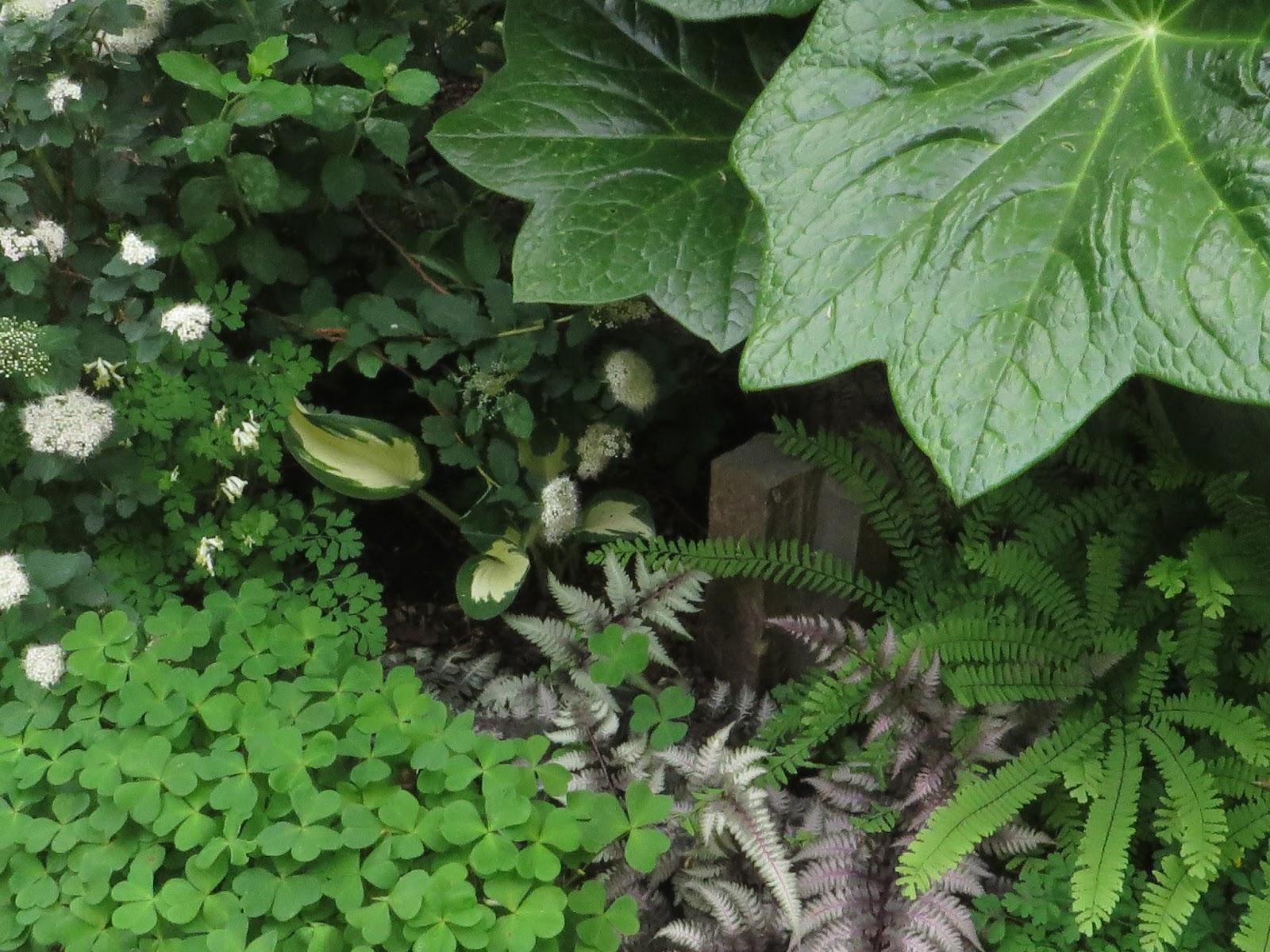 Purple Garden White Garden