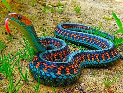 world's most beautiful snake