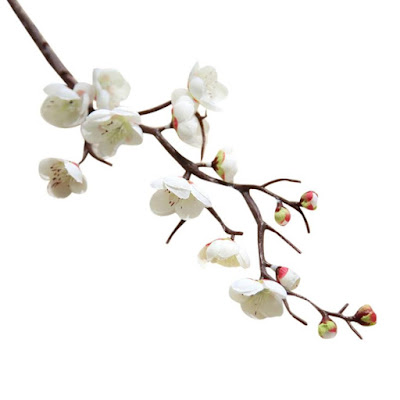 Sakura (flor del cerezo
