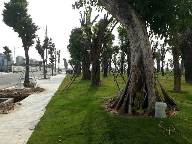 Không gian cây xanh dự án Louis City
