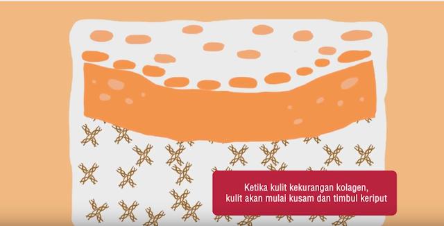 Ilustrasi+Kolagen+Dalam+Kulit+Manusia