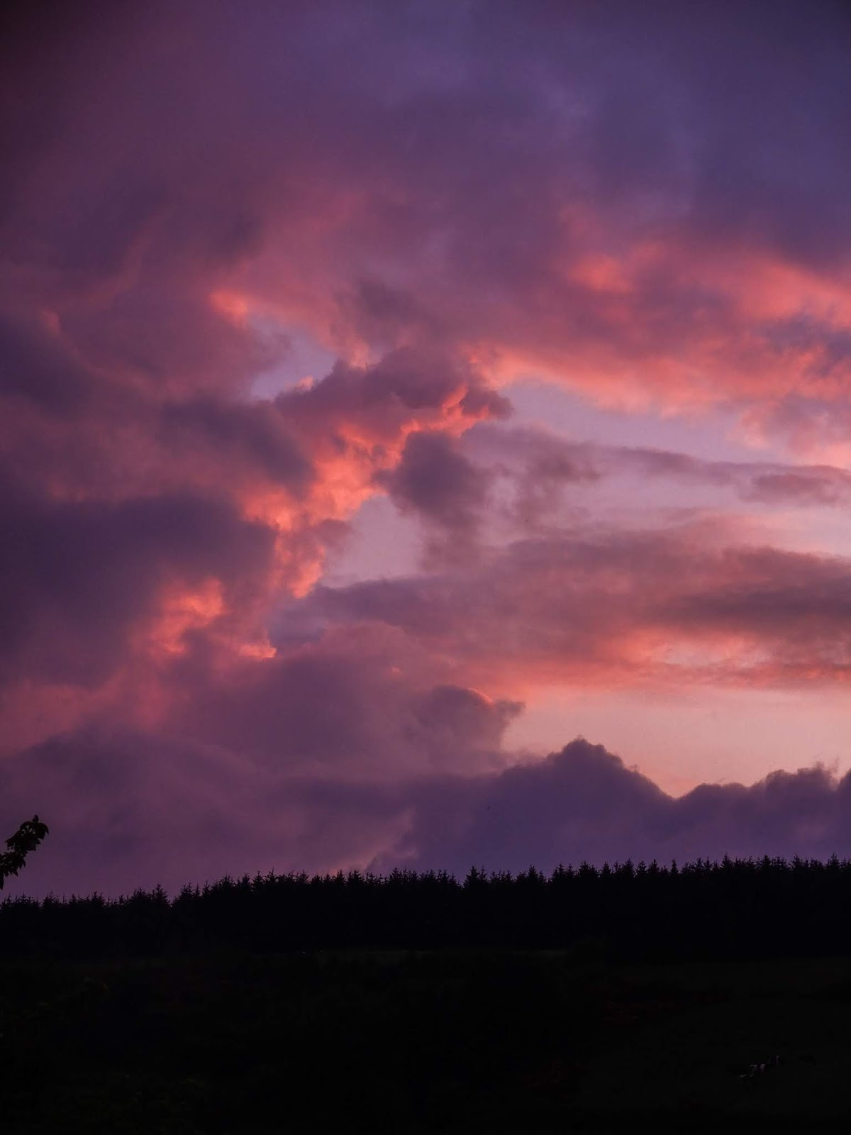 Big and fluffy pink and purple clouds at sunset over a forestry on a mountain top in Co.Cork, Ireland.