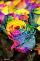 tęczowe barwione róże