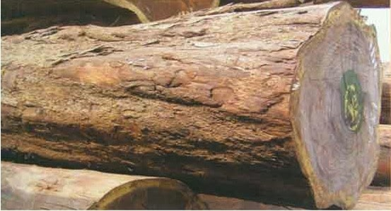 Wood logs for sale south africa