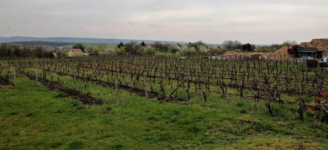 Budapest by locals wine tour viinitila retki