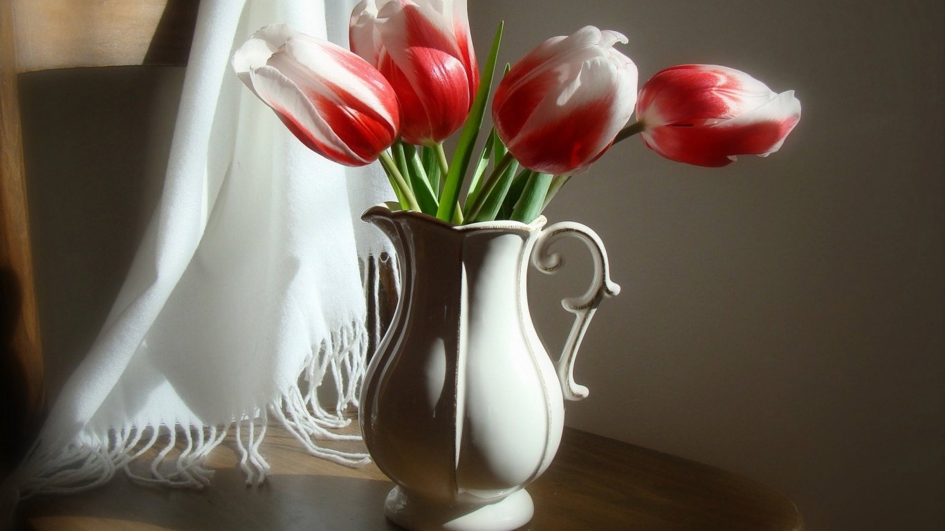 Wallpaper: Tulips HD Wallpapers